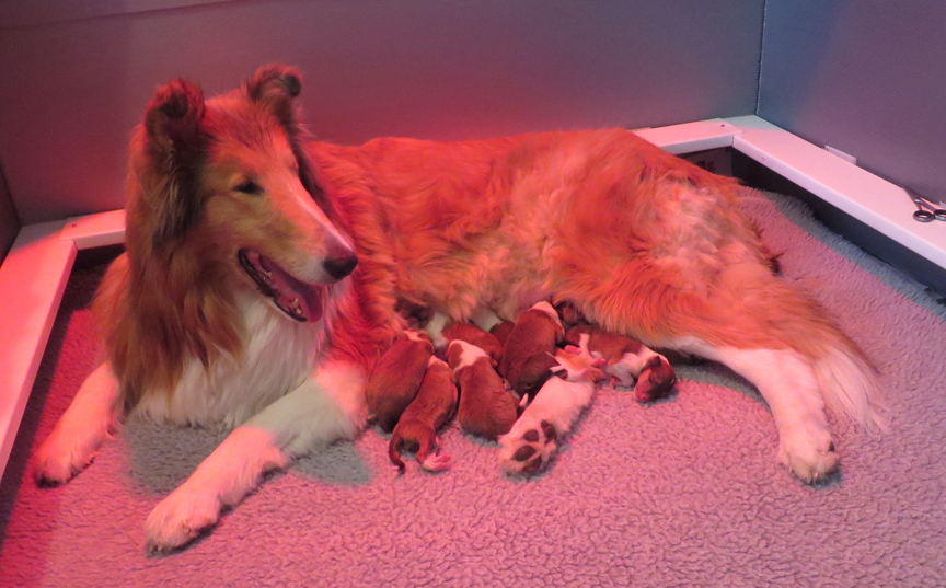 Newborn Puppies    Care of the Newborn puppy
